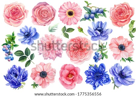 Flowers on a white background. Watercolor clipart of delicate flowers anemones, roses, dahlias, blueberries