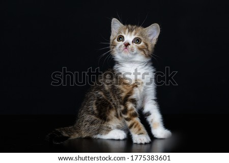 Playful kitten on a black background.Cute and interesting.Postcard.Beautiful picture.Space for text