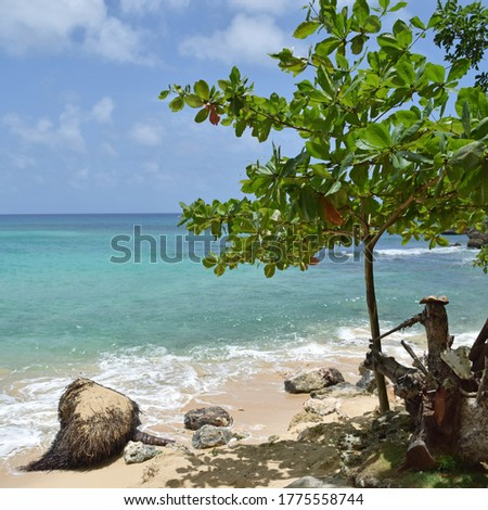 Beach pics in the tropic