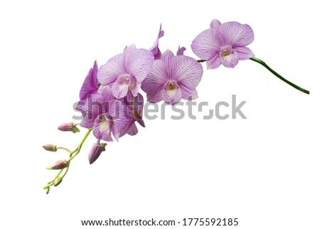 Beautiful orchid flower with isolated on white background.