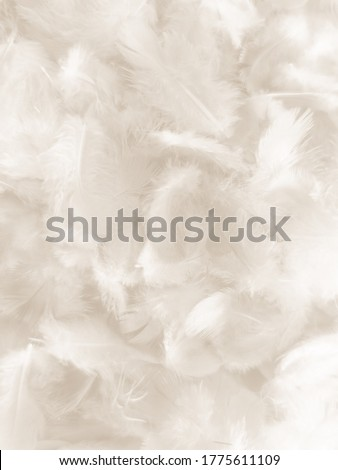 Beautiful abstract gray and white feathers on white background, soft brown feather texture on white pattern background, gray feather background Royalty-Free Stock Photo #1775611109