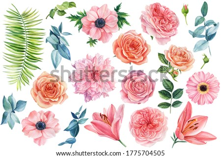 Set of flowers, pink lilies, anemones, roses, palm leaf, eucalyptus leaves on a white background. Watercolor drawing