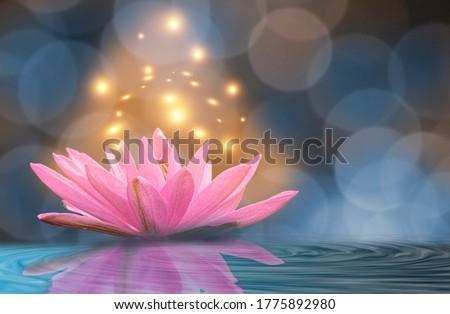 Yellow light lotus Blue background.