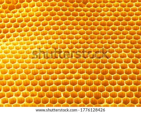 Background texture and pattern of wax honeycombs from a bee hive filled with golden honey,Honey bee nectar.High quality picture. Macro shot.