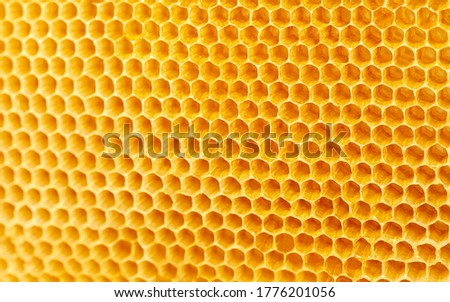 Background texture and pattern of wax honeycombs from a bee hive filled with golden honey, High-quality picture. Macro shot.