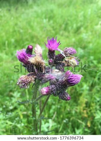animal on an austrian meadow - Spider