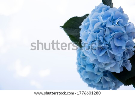 Blue flowers on the mirror with a reflection of a little cloudy sky. Blurred side background. Free space.