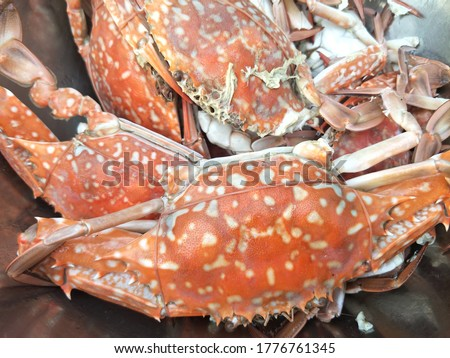 Steamed blue crab in a bowl. Delicious steamed crab. Seafood in a bowl. Crab meat and claws.