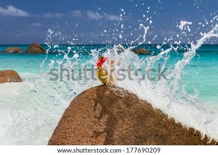 Seychelles beach, coconut, splash #177690209