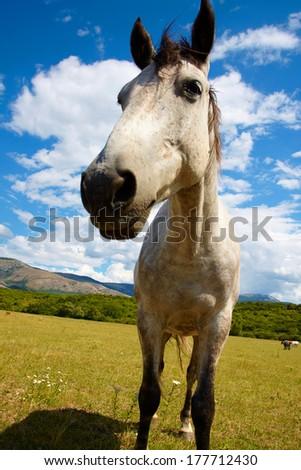 photo horse walking around the field