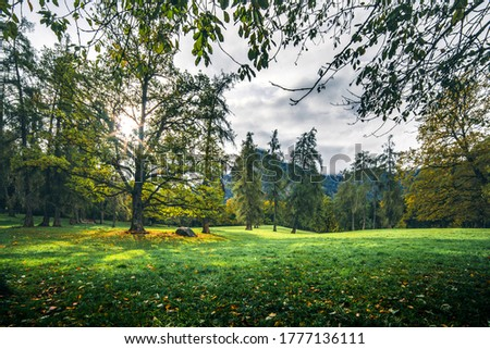 Forest meadow trees in mountains. Autumn forest meadow grass #1777136111