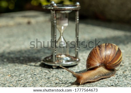 Dark achatina snail with Dark shell crawling on the Stone floor near Hourglass. Deadline concept and Slow current time. No focus, specifically. Royalty-Free Stock Photo #1777564673