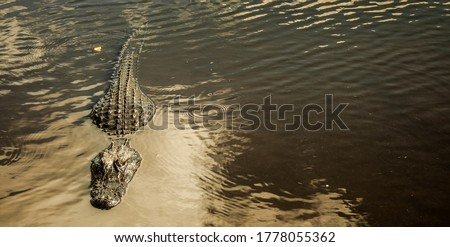 Monochrome picture of an alligator