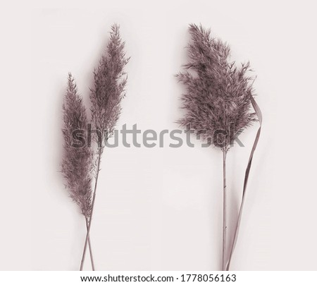 Faded fluffy grass photo set. Dried pampas leaves. Delicate plant collection. Art plant photography on pastel beige background.