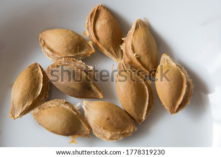Apricot kernels white background .  An apricot kernel is the seed of an apricot, which is located within the hard endocarp . apricot kernel isolated on white background #1778319230