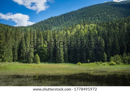 Lake in the mountains. Coniferous forest   Royalty-Free Stock Photo #1778495972