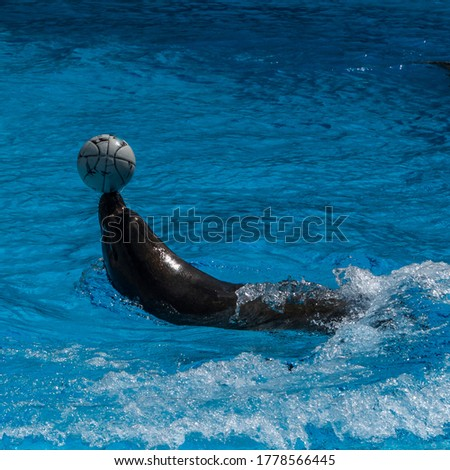 Seal showing trick with ball. Picture taken in Lithuania.