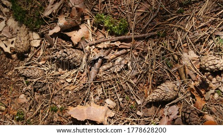 Natural brown and green forest ground Royalty-Free Stock Photo #1778628200