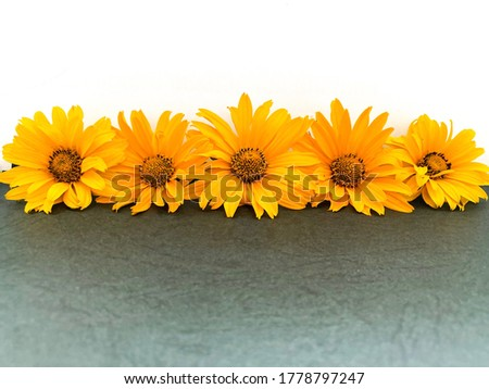 Bright orange wild summer flowers on a dark abstract surface.Free space.