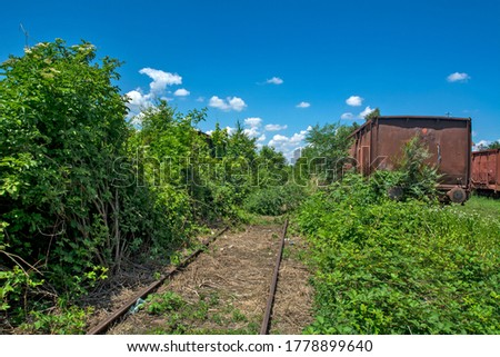 A sad picture of the railroad. The railway track and wagons in the bushes and bushes that hid the rails.