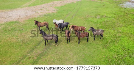 Aerial view of horses on a meadow. Beautiful countryside scenery with horses from above. High quality photo #1779157370