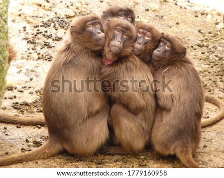 picture of five monkeys family together