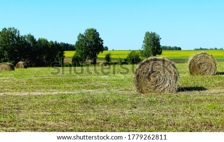 Hay in bales. Cut grass in rolls. Hay Making. Dry hay for animal feeding. Making hay for the winter #1779262811