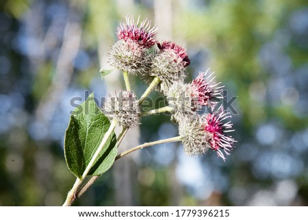 posters wild herbs, medicinal plants #1779396215