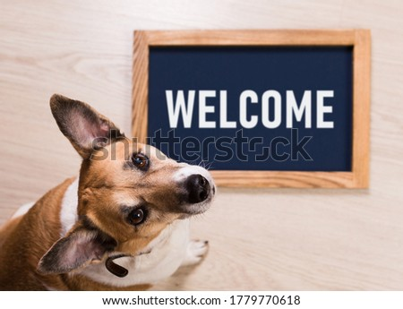 Funny portrait of cute dog with letter board inscription Welcom lying on floor.
