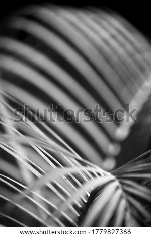 Black and white Abstract photo of leaves of a plant