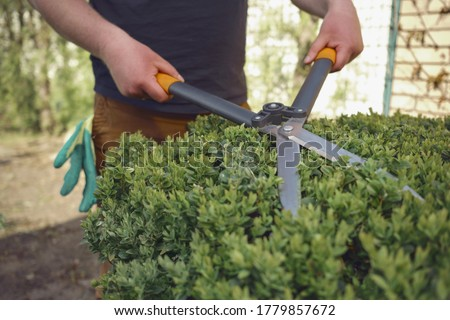 Man with bare hands is trimming a green shrub using hedge shears on his backyard. Gloves are in his pocket. Professional pruning tool. Close up Royalty-Free Stock Photo #1779857672