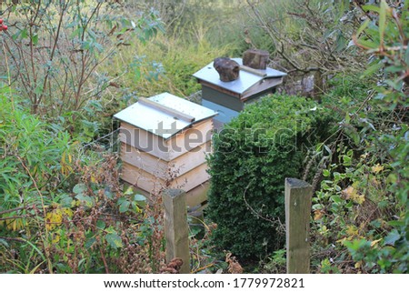 bee hive house where bumble bees make honey stock, photo, photograph, picture, image