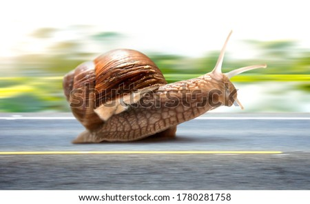 Picture. Snail rushing along an asphalt road