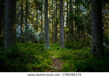 Deep forest hiking trail view. Woodland forest trail. Mossy ofrest in woodland. Woodland forest #1780486376