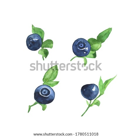 Set of blueberry on branch isolated on white background. Watercolor hand drawing illustration of summer food. Bilberry plant with green leaves. Perfect for card, banner, cover, poster. Clip art.