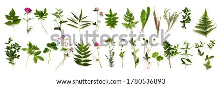 Botanical set. herbarium of various plants on a white background. Freshly cut plants.  Forest flowers, herbs, berries. Royalty-Free Stock Photo #1780536893