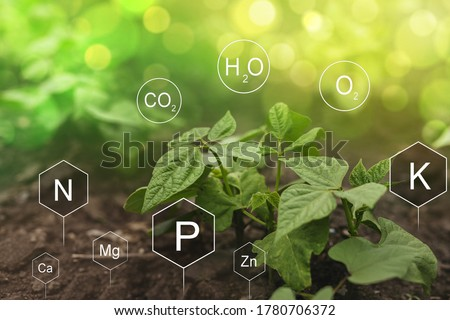 Role of nutrients in Bean plant life. Soil with digital mineral nutrients icon. #1780706372