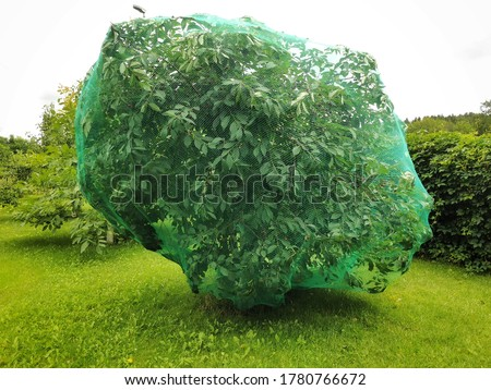 Bird protection net for Cherry trees Royalty-Free Stock Photo #1780766672