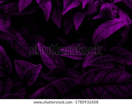 Beautiful abstract color blue and purple flowers on dark background and purple graphic pink flower frame and pink leaves texture, purple background, colorful graphics banner, purple leaves