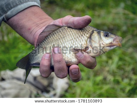 picture with a fish in a fisherman's hand, summer fishing, hobby fishing