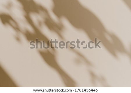 Flower shadows in sunlight. Floral silhouette on neutral beige background Royalty-Free Stock Photo #1781436446