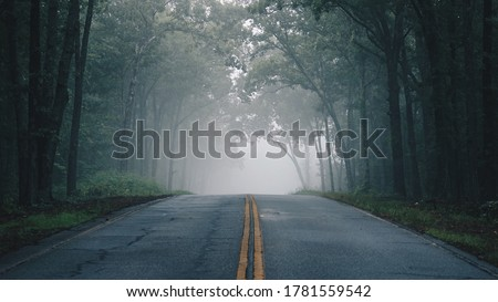 A lonely foggy road cutting through a thick and quiet wood. Royalty-Free Stock Photo #1781559542