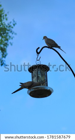 Doves on the bird house - Candid Picture