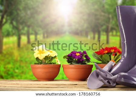 garden and flowers  #178160756
