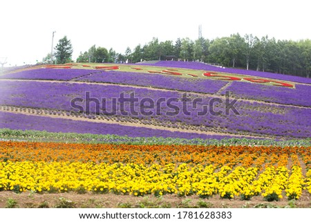 A hill of lavender flowers and other colorful blooming flowers bunch of red flowers on top written in Japanese word means furano garden