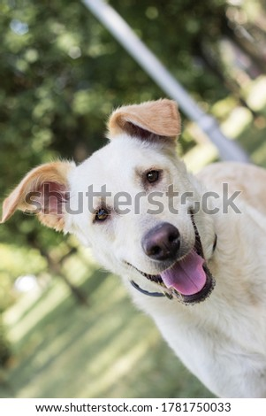 Portrait of smiling mixed breed dog