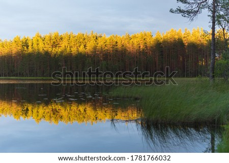 Beauty of the Northern nature: shaded lake shores and tops of pine tree forest lit with setting sun and reflected on the water surface. On the border of Russia and Finland. #1781766032