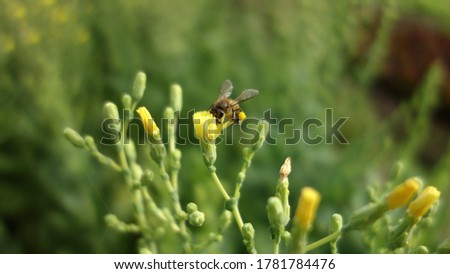 Bug and insect in closeup picture. Small life around salad flower, some of yellow, some of brown in green background.