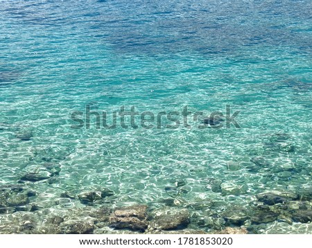Clean water with Sea urchin under the water during summer season. Sea urchins are typically spiny, globular animals, echinoderms in the class Echinoidea.  Royalty-Free Stock Photo #1781853020