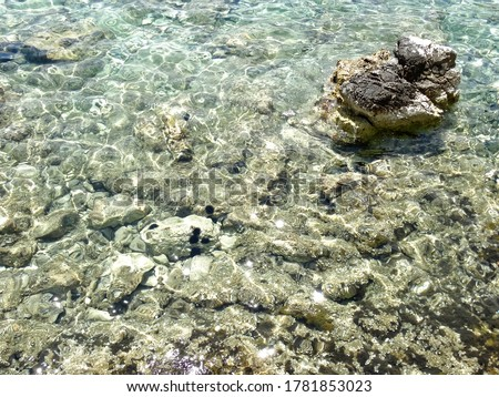 Clean water with Sea urchin under the water during summer season. Sea urchins are typically spiny, globular animals, echinoderms in the class Echinoidea.  Royalty-Free Stock Photo #1781853023